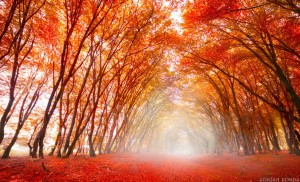 orange path 2