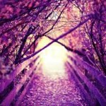 purple path